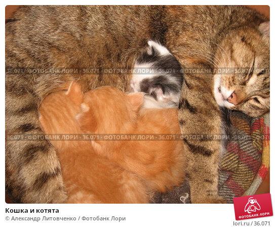 Кошка и котята, фото № 36071, снято 25 января 2017 г. (c) Александр Литовченко / Фотобанк Лори