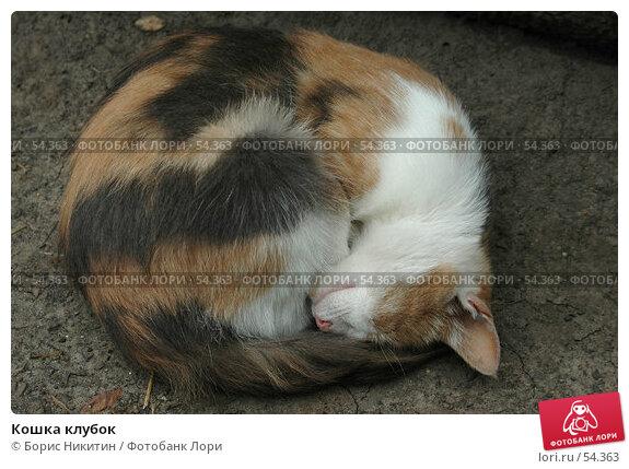 Кошка клубок, фото № 54363, снято 9 августа 2005 г. (c) Борис Никитин / Фотобанк Лори