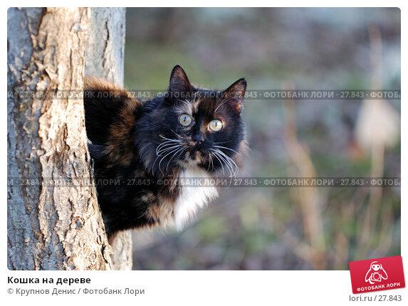 Кошка на дереве, фото № 27843, снято 20 февраля 2007 г. (c) Крупнов Денис / Фотобанк Лори