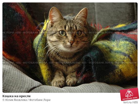 Кошка на кресле, фото № 655, снято 14 апреля 2005 г. (c) Юлия Яковлева / Фотобанк Лори