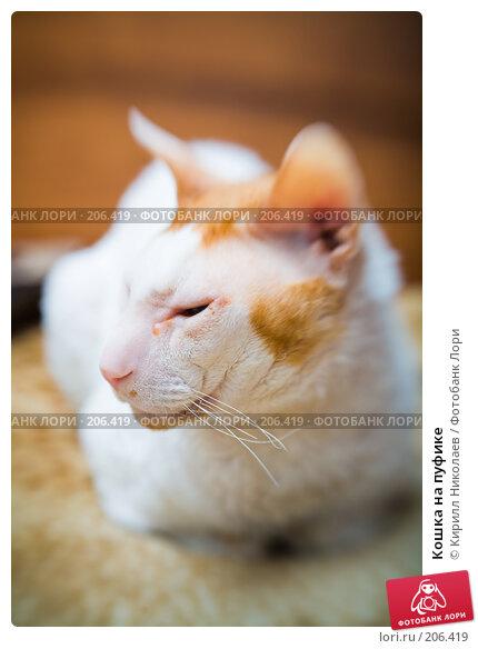 Купить «Кошка на пуфике», фото № 206419, снято 14 сентября 2007 г. (c) Кирилл Николаев / Фотобанк Лори