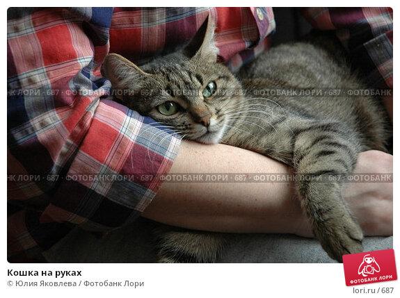 Кошка на руках, фото № 687, снято 15 февраля 2005 г. (c) Юлия Яковлева / Фотобанк Лори