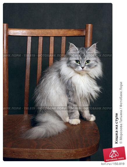 Кошка на стуле, фото № 150819, снято 24 декабря 2006 г. (c) Морозова Татьяна / Фотобанк Лори