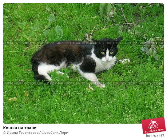 Кошка на траве, эксклюзивное фото № 467, снято 24 июня 2004 г. (c) Ирина Терентьева / Фотобанк Лори