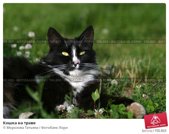 Кошка на траве, фото № 150803, снято 14 июня 2004 г. (c) Морозова Татьяна / Фотобанк Лори