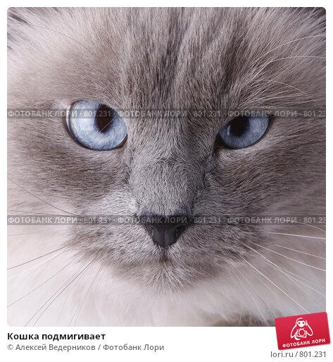 Кошка подмигивает. Стоковое фото, фотограф Алексей Ведерников / Фотобанк Лори