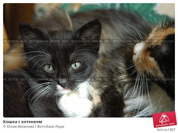 Купить «Кошка с котенком», фото № 667, снято 28 июня 2005 г. (c) Юлия Яковлева / Фотобанк Лори