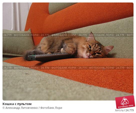 Кошка с пультом, фото № 24779, снято 10 марта 2007 г. (c) Александр Литовченко / Фотобанк Лори