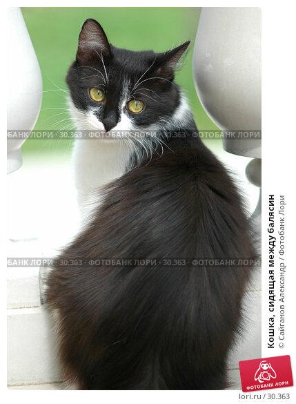 Кошка, сидящая между балясин, фото № 30363, снято 24 июня 2006 г. (c) Сайганов Александр / Фотобанк Лори