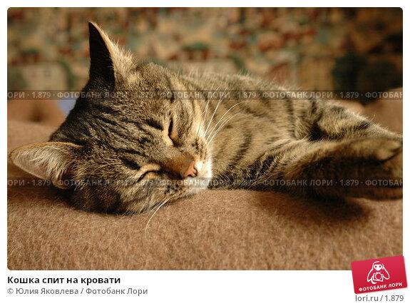 Кошка спит на кровати, фото № 1879, снято 21 марта 2006 г. (c) Юлия Яковлева / Фотобанк Лори