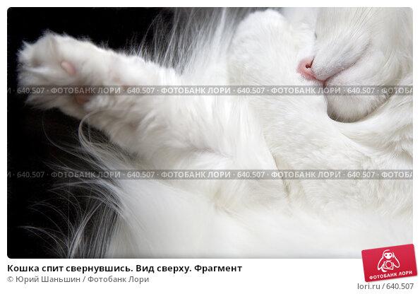 Купить «Кошка спит свернувшись. Вид сверху. Фрагмент», фото № 640507, снято 24 июля 2019 г. (c) Юрий Шаньшин / Фотобанк Лори