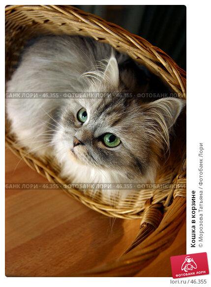 Кошка в корзине, фото № 46355, снято 28 декабря 2005 г. (c) Морозова Татьяна / Фотобанк Лори
