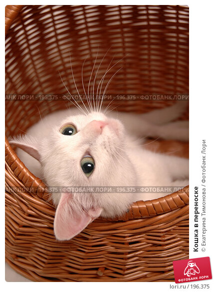 Кошка в переноске, фото № 196375, снято 31 января 2008 г. (c) Екатерина Тимонова / Фотобанк Лори