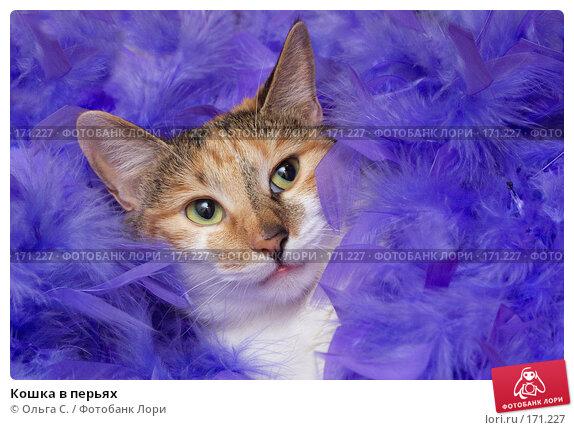 Купить «Кошка в перьях», фото № 171227, снято 2 февраля 2007 г. (c) Ольга С. / Фотобанк Лори