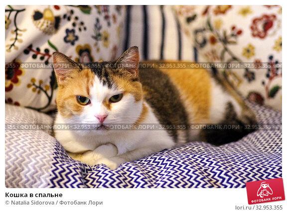 Кошка в спальне. Стоковое фото, фотограф Natalya Sidorova / Фотобанк Лори