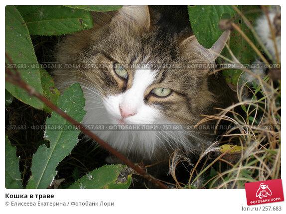 Кошка в траве, фото № 257683, снято 26 сентября 2005 г. (c) Елисеева Екатерина / Фотобанк Лори