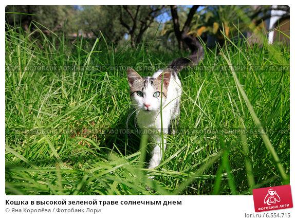 Купить «Кошка в высокой зеленой траве солнечным днем», фото № 6554715, снято 10 октября 2014 г. (c) Яна Королёва / Фотобанк Лори