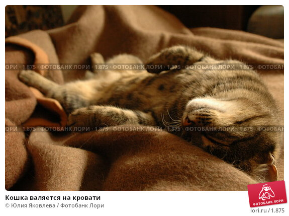 Кошка валяется на кровати, фото № 1875, снято 21 марта 2006 г. (c) Юлия Яковлева / Фотобанк Лори