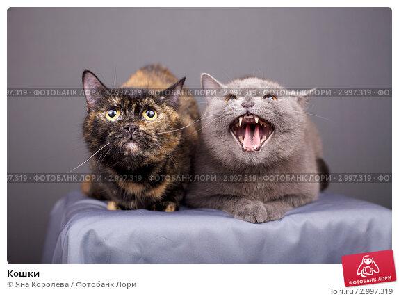 Купить «Кошки», эксклюзивное фото № 2997319, снято 20 мая 2019 г. (c) Яна Королёва / Фотобанк Лори