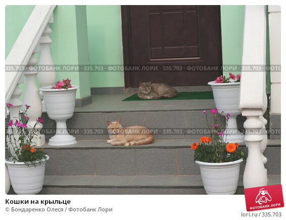 Купить «Кошки на крыльце», эксклюзивное фото № 335703, снято 26 июня 2008 г. (c) Бондаренко Олеся / Фотобанк Лори
