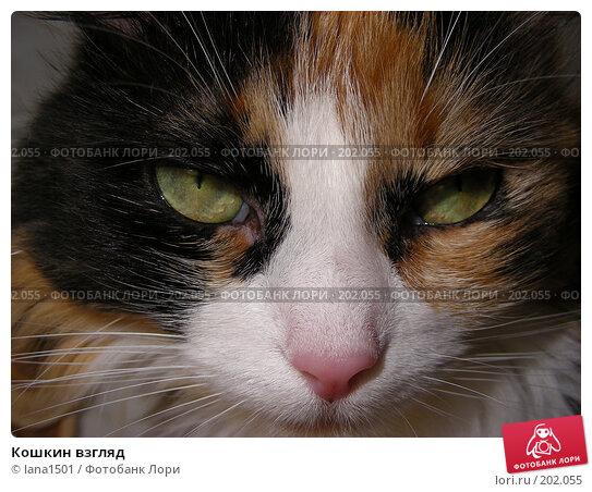 Кошкин взгляд, эксклюзивное фото № 202055, снято 3 декабря 2007 г. (c) lana1501 / Фотобанк Лори