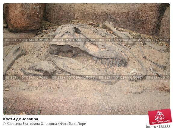 Кости динозавра, фото № 188883, снято 17 августа 2007 г. (c) Карасева Екатерина Олеговна / Фотобанк Лори