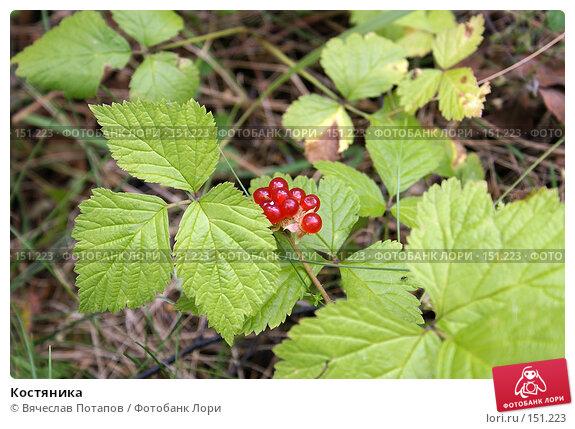 Костяника, фото № 151223, снято 26 августа 2006 г. (c) Вячеслав Потапов / Фотобанк Лори