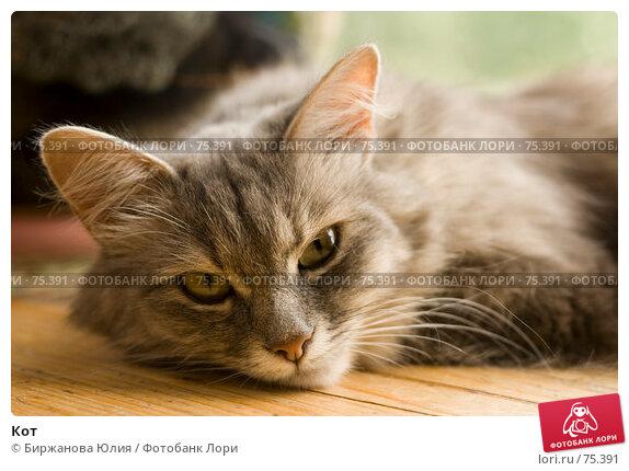 Кот, фото № 75391, снято 29 июля 2007 г. (c) Биржанова Юлия / Фотобанк Лори