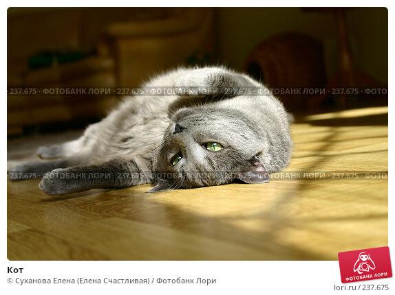 Кот, фото № 237675, снято 30 марта 2008 г. (c) Суханова Елена (Елена Счастливая) / Фотобанк Лори
