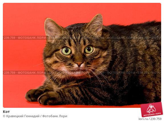 Кот, фото № 239759, снято 3 декабря 2016 г. (c) Кравецкий Геннадий / Фотобанк Лори