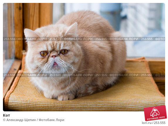 Кот, эксклюзивное фото № 253555, снято 16 апреля 2008 г. (c) Александр Щепин / Фотобанк Лори