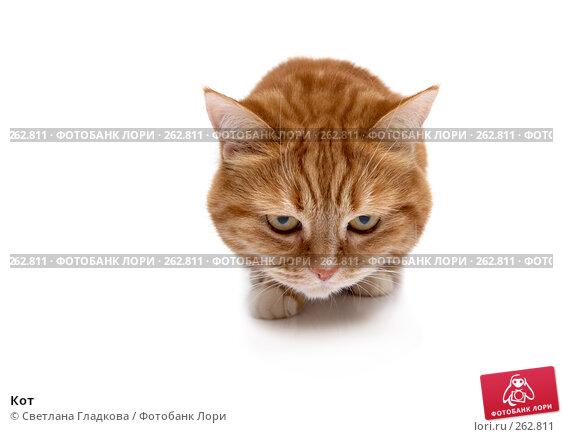 Кот, фото № 262811, снято 8 апреля 2008 г. (c) Cветлана Гладкова / Фотобанк Лори