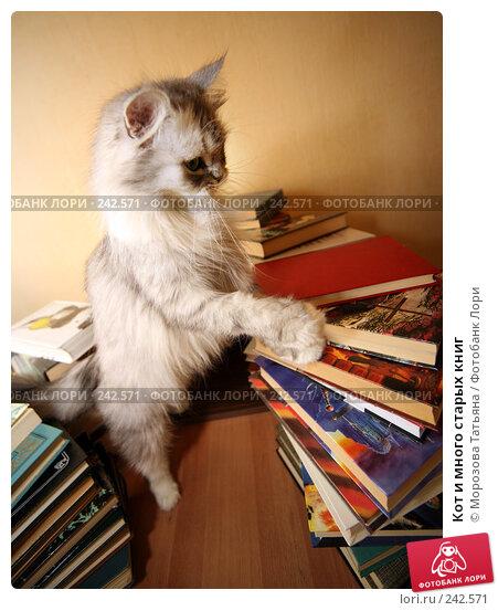 Купить «Кот и много старых книг», фото № 242571, снято 11 мая 2007 г. (c) Морозова Татьяна / Фотобанк Лори