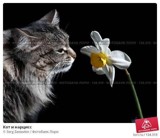 Кот и нарцисс, фото № 134319, снято 28 мая 2006 г. (c) Serg Zastavkin / Фотобанк Лори