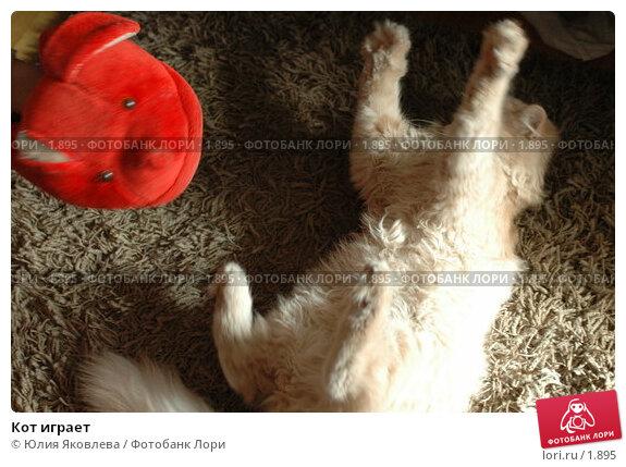 Кот играет, фото № 1895, снято 22 марта 2006 г. (c) Юлия Яковлева / Фотобанк Лори