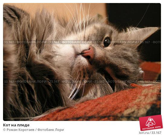 Кот на пледе, фото № 33167, снято 27 марта 2005 г. (c) Роман Коротаев / Фотобанк Лори