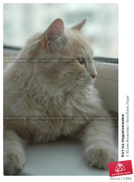 Кот на подоконнике, фото № 1899, снято 22 марта 2006 г. (c) Юлия Яковлева / Фотобанк Лори