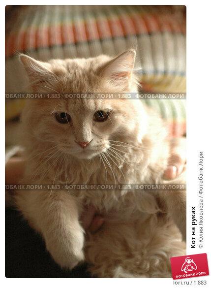 Кот на руках, фото № 1883, снято 22 марта 2006 г. (c) Юлия Яковлева / Фотобанк Лори