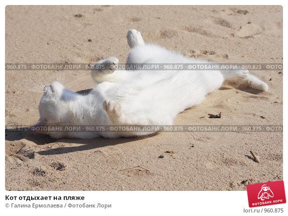 Кот отдыхает на пляже. Стоковое фото, фотограф Галина Ермолаева / Фотобанк Лори