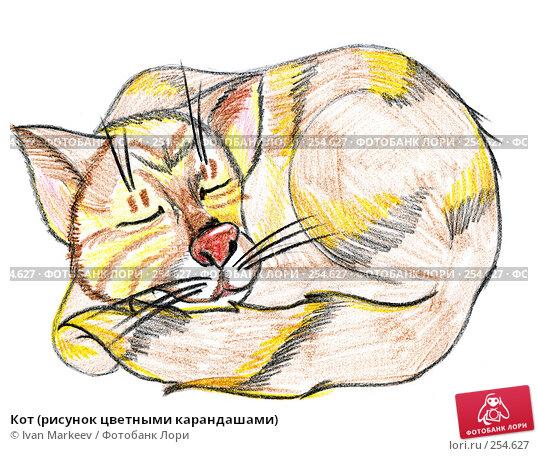 Кот (рисунок цветными карандашами), иллюстрация № 254627 (c) Василий Каргандюм / Фотобанк Лори
