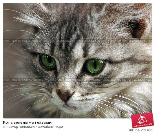 Купить «Кот с зелеными глазами», эксклюзивное фото № 294635, снято 26 апреля 2018 г. (c) Виктор Зиновьев / Фотобанк Лори