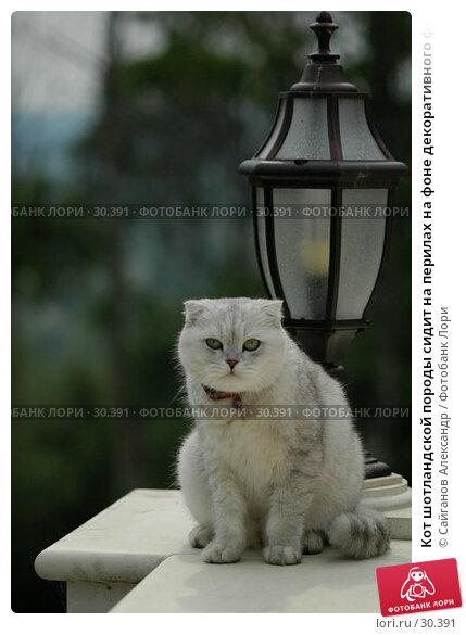 Кот шотландской породы сидит на перилах на фоне декоративного фонаря, фото № 30391, снято 24 июня 2006 г. (c) Сайганов Александр / Фотобанк Лори
