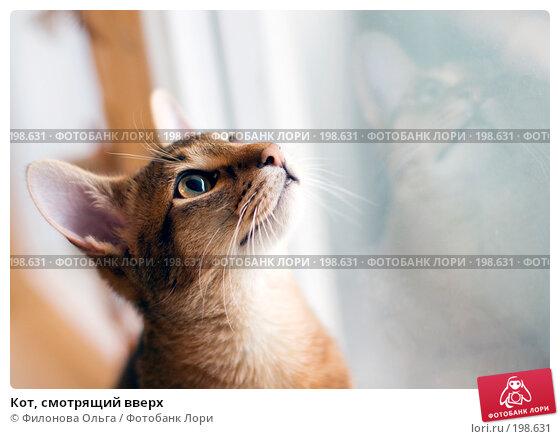 Купить «Кот, смотрящий вверх», фото № 198631, снято 7 февраля 2008 г. (c) Филонова Ольга / Фотобанк Лори