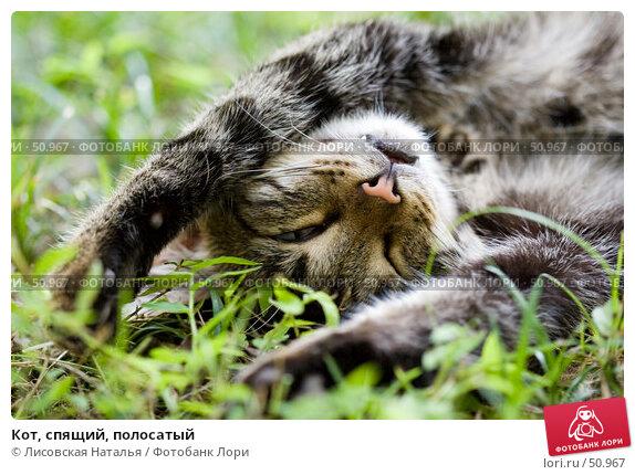 Кот, спящий, полосатый, фото № 50967, снято 27 августа 2006 г. (c) Лисовская Наталья / Фотобанк Лори