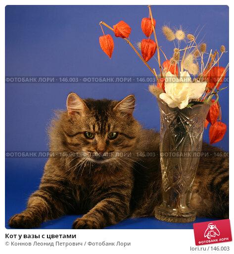 Купить «Кот у вазы с цветами», фото № 146003, снято 12 декабря 2007 г. (c) Коннов Леонид Петрович / Фотобанк Лори