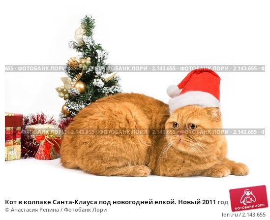 Купить «Кот в колпаке Санта-Клауса под новогодней елкой. Новый 2011 год кота», фото № 2143655, снято 16 ноября 2010 г. (c) Анастасия Репина / Фотобанк Лори