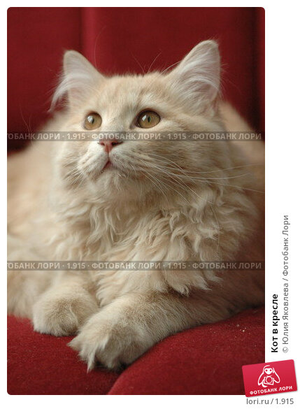 Кот в кресле, фото № 1915, снято 22 марта 2006 г. (c) Юлия Яковлева / Фотобанк Лори