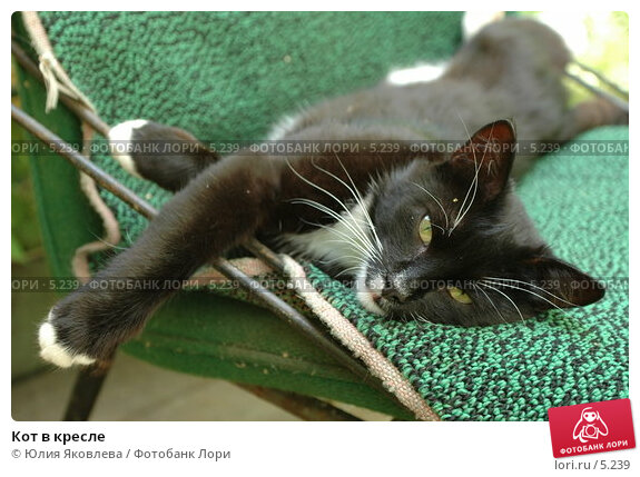 Кот в кресле, фото № 5239, снято 5 июля 2006 г. (c) Юлия Яковлева / Фотобанк Лори