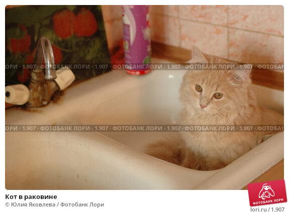 Купить «Кот в раковине», фото № 1907, снято 22 марта 2006 г. (c) Юлия Яковлева / Фотобанк Лори