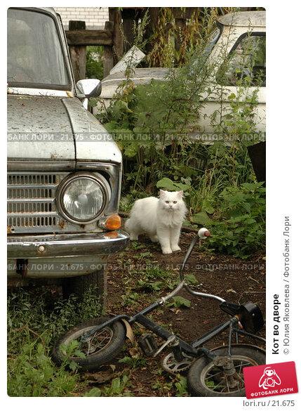 Кот во дворе, фото № 21675, снято 11 августа 2006 г. (c) Юлия Яковлева / Фотобанк Лори